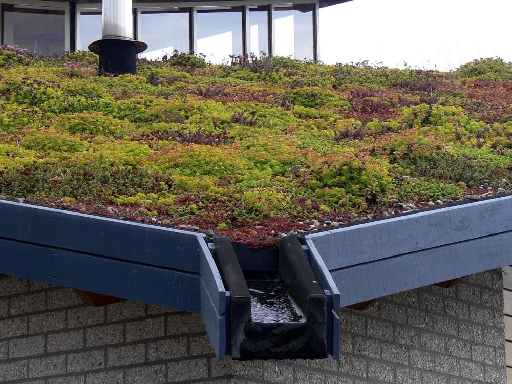 Exemple d'une toiture végétalisée
