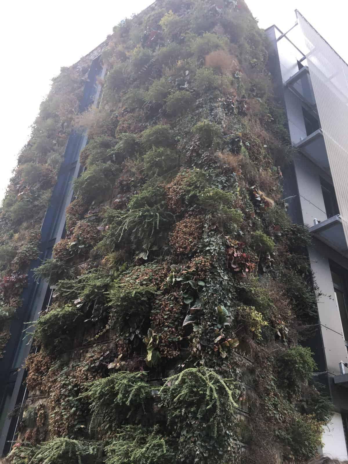 Mur végétalisé de l'Ena