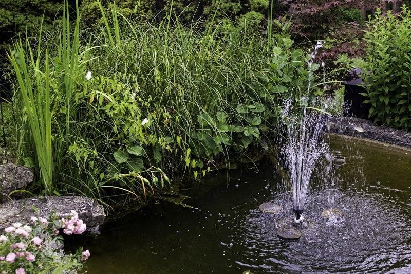 Jardin aquatique