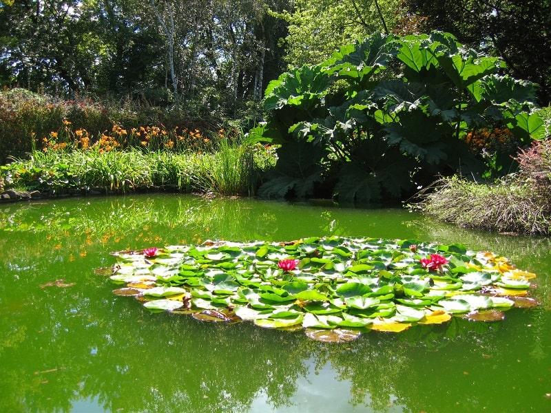 Jardin aquatique - © Poiesia