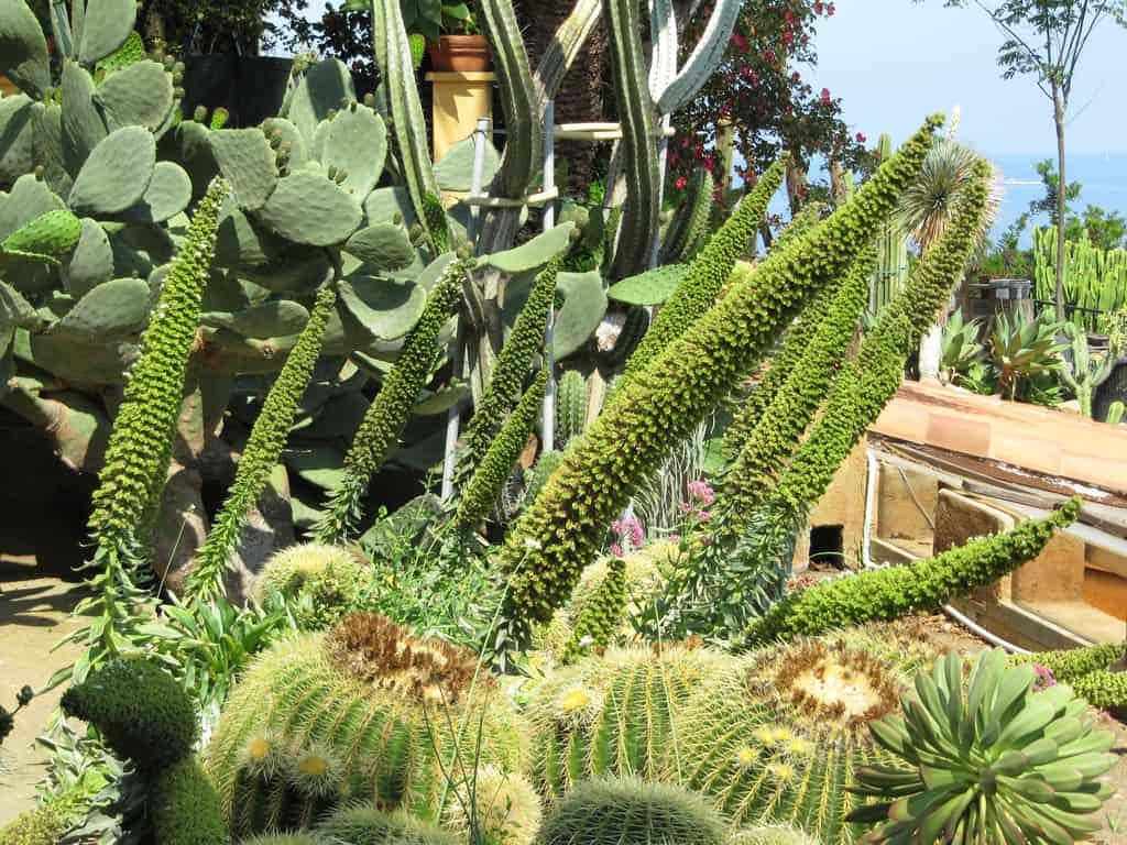 Jardin exotique - © Daniel70mi Falciola
