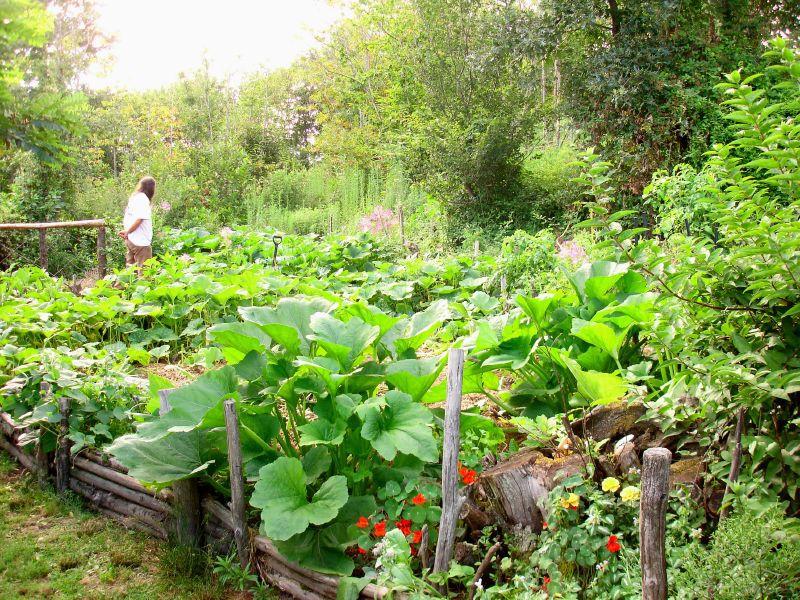 Jardin potager - © Couleur lavande