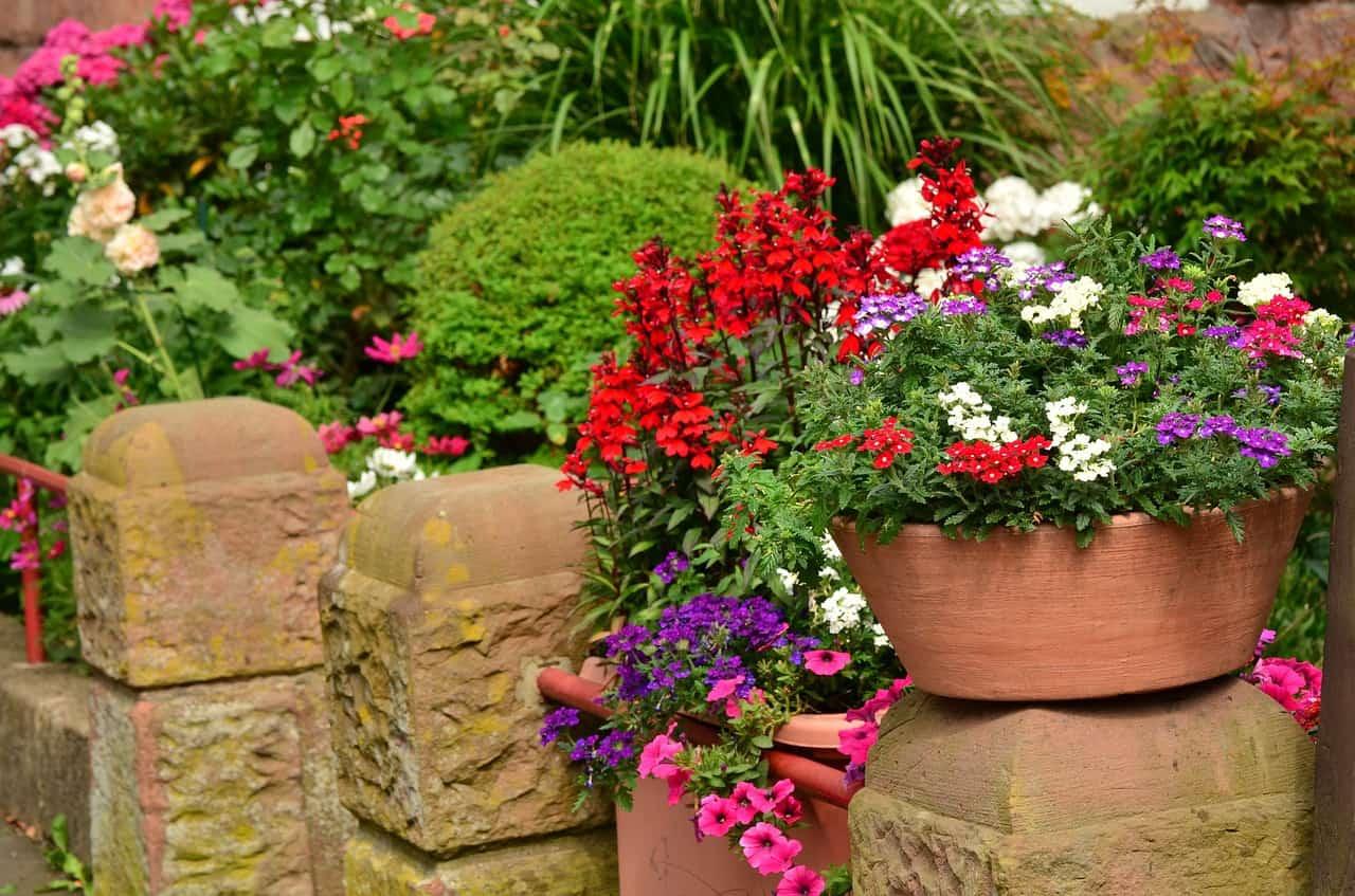 Plantation - pots